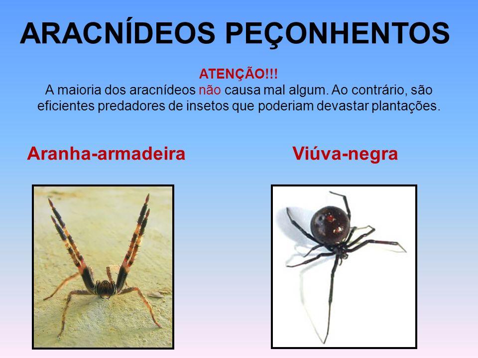 ARACNÍDEOS PEÇONHENTOS