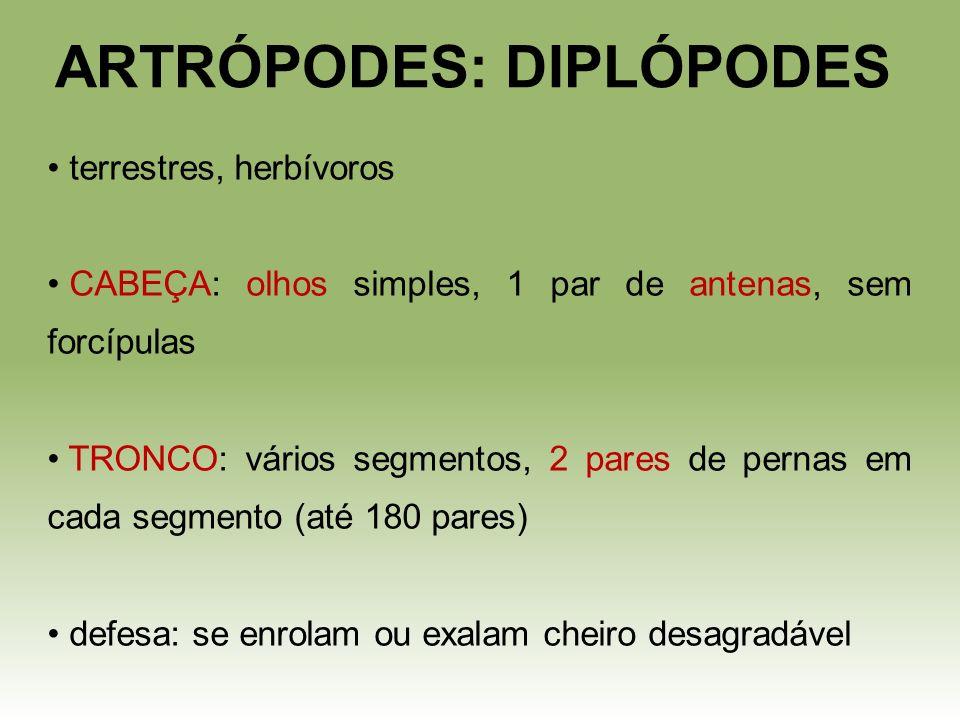 ARTRÓPODES: DIPLÓPODES