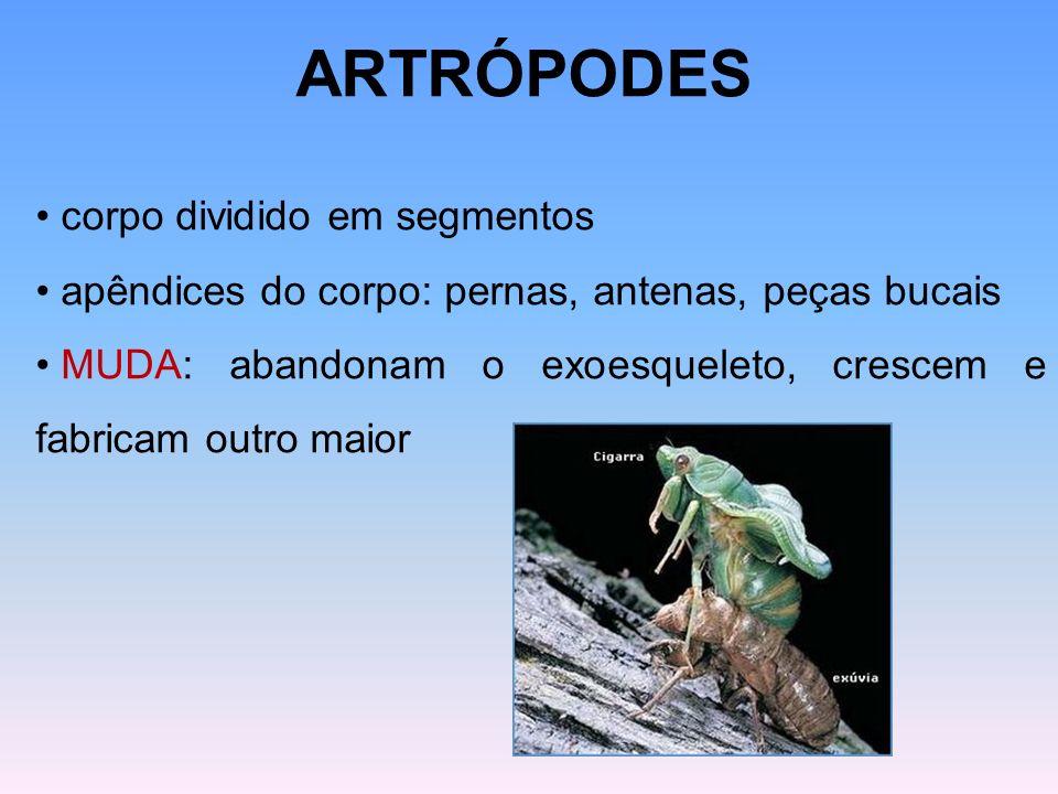 ARTRÓPODES corpo dividido em segmentos