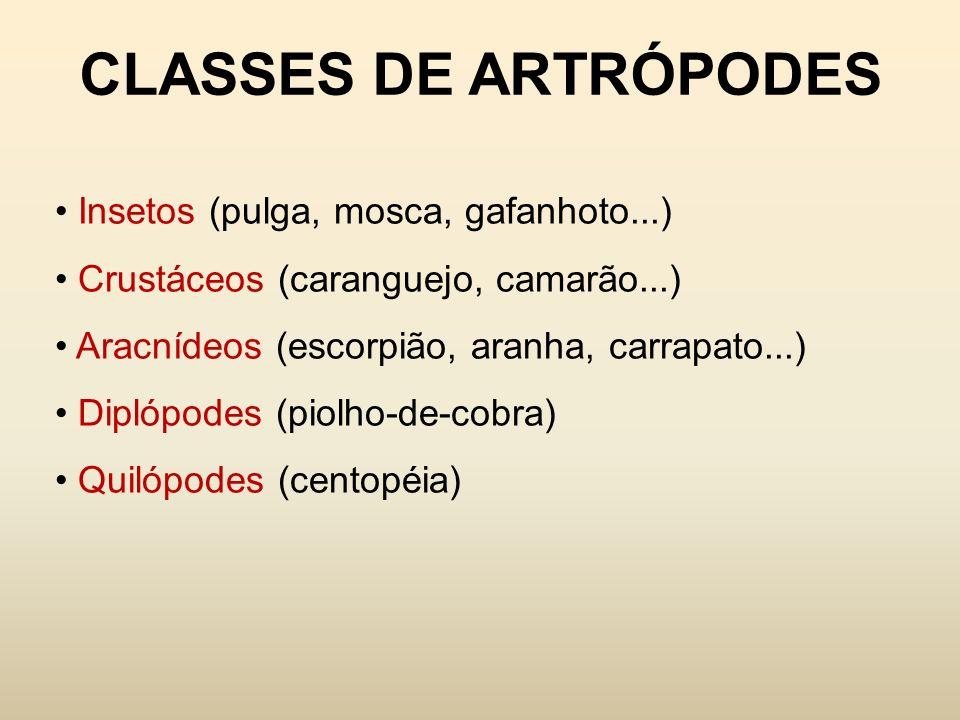 CLASSES DE ARTRÓPODES Insetos (pulga, mosca, gafanhoto...)