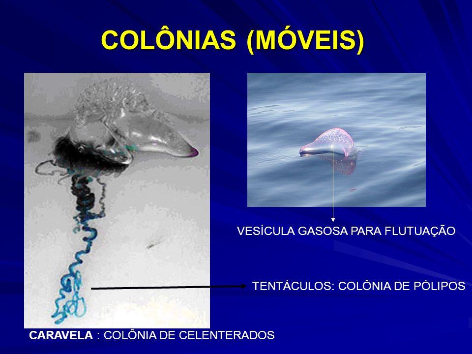 COLÔNIAS (MÓVEIS) VESÍCULA GASOSA PARA FLUTUAÇÃO