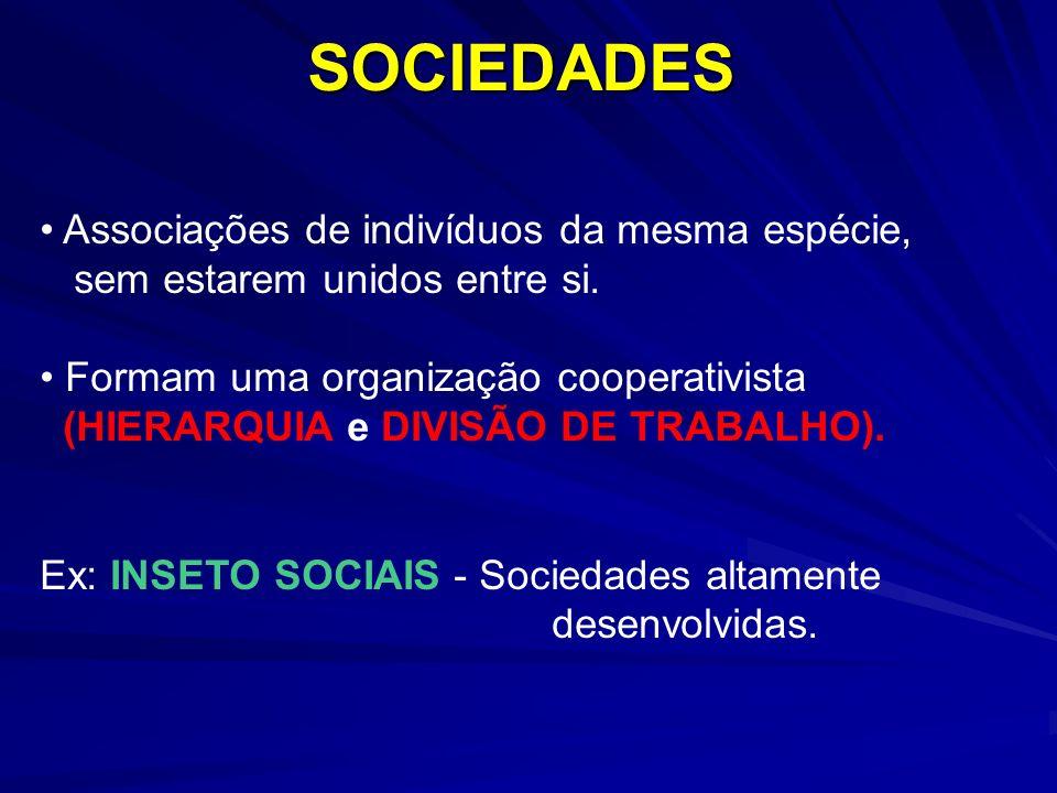 SOCIEDADES Associações de indivíduos da mesma espécie,