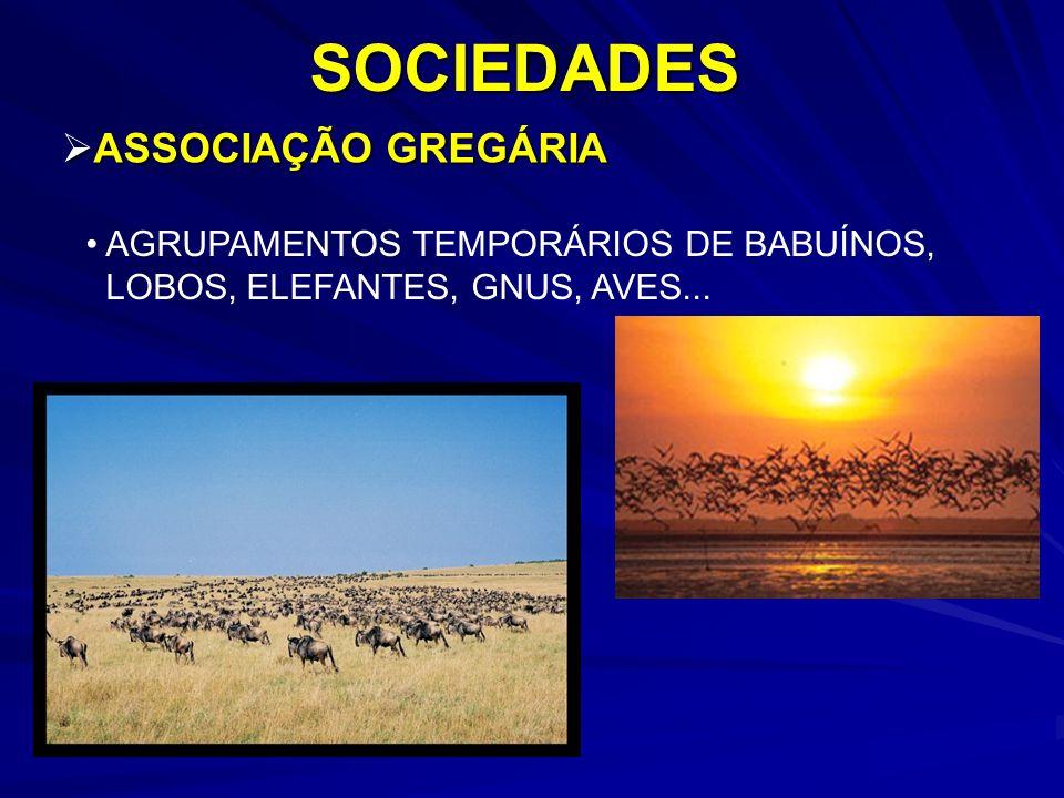 SOCIEDADES ASSOCIAÇÃO GREGÁRIA AGRUPAMENTOS TEMPORÁRIOS DE BABUÍNOS,
