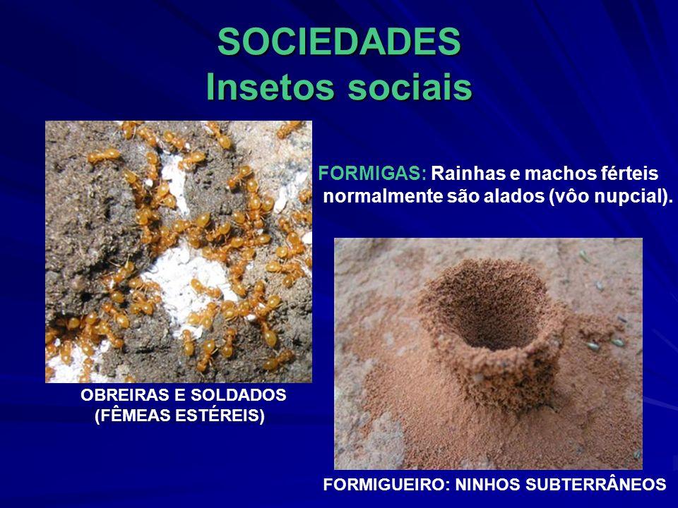 SOCIEDADES Insetos sociais