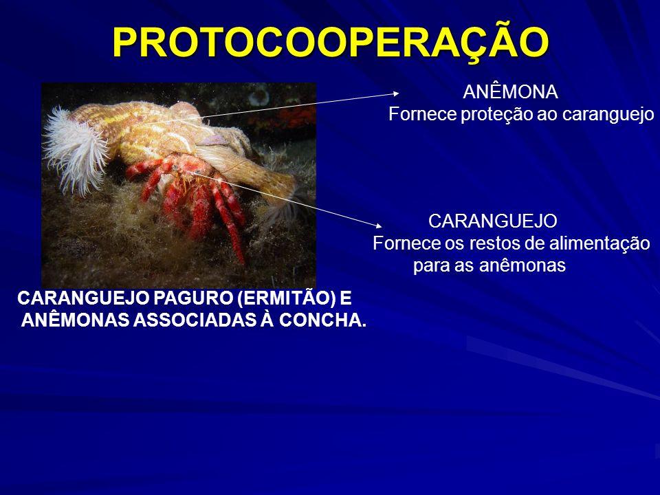 PROTOCOOPERAÇÃO ANÊMONA Fornece proteção ao caranguejo CARANGUEJO