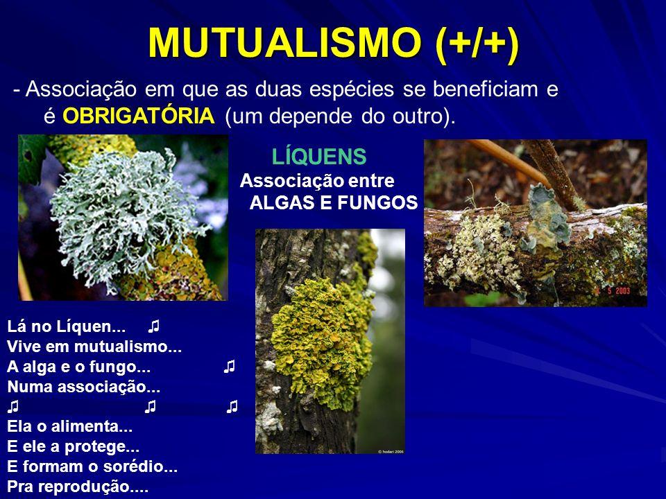 MUTUALISMO (+/+) - Associação em que as duas espécies se beneficiam e