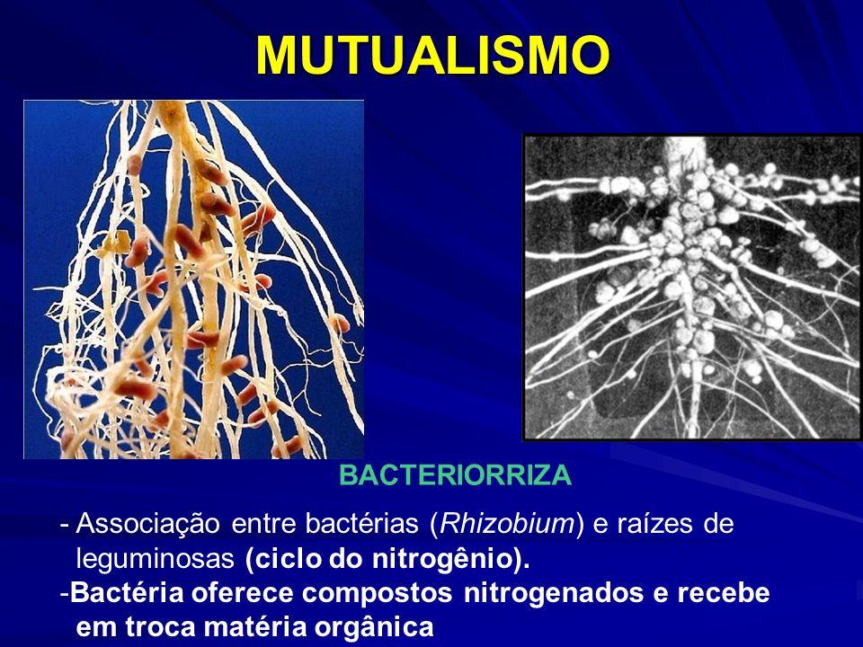 MUTUALISMO BACTERIORRIZA