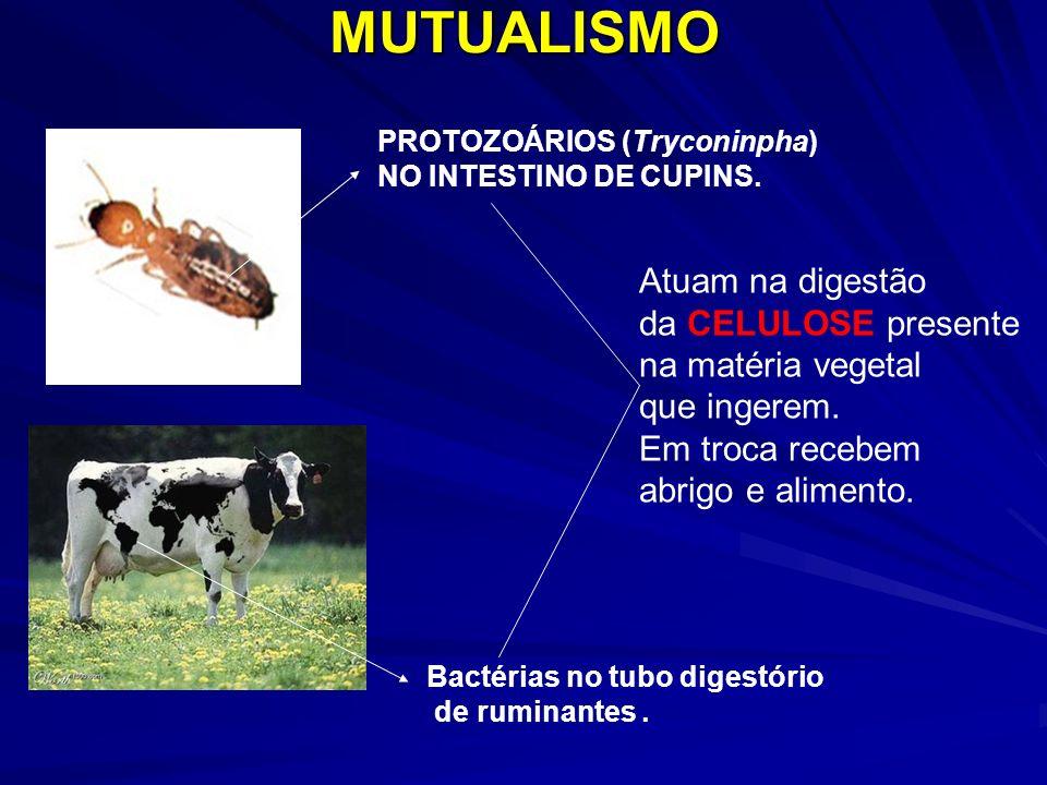 MUTUALISMO Atuam na digestão da CELULOSE presente na matéria vegetal