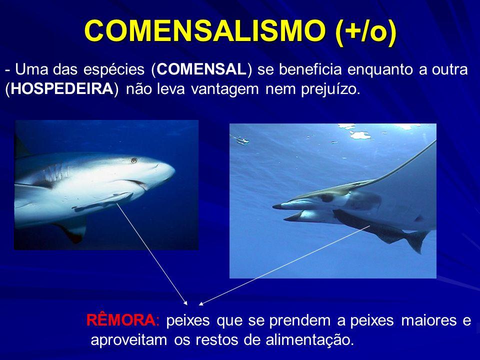 COMENSALISMO (+/o) Uma das espécies (COMENSAL) se beneficia enquanto a outra. (HOSPEDEIRA) não leva vantagem nem prejuízo.