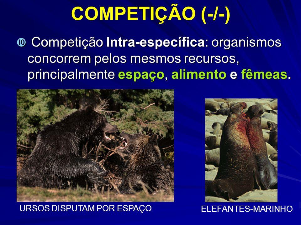 COMPETIÇÃO (-/-) Competição Intra-específica: organismos concorrem pelos mesmos recursos, principalmente espaço, alimento e fêmeas.