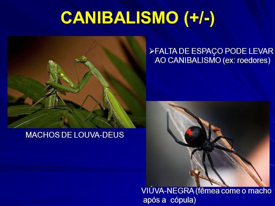 CANIBALISMO (+/-) FALTA DE ESPAÇO PODE LEVAR