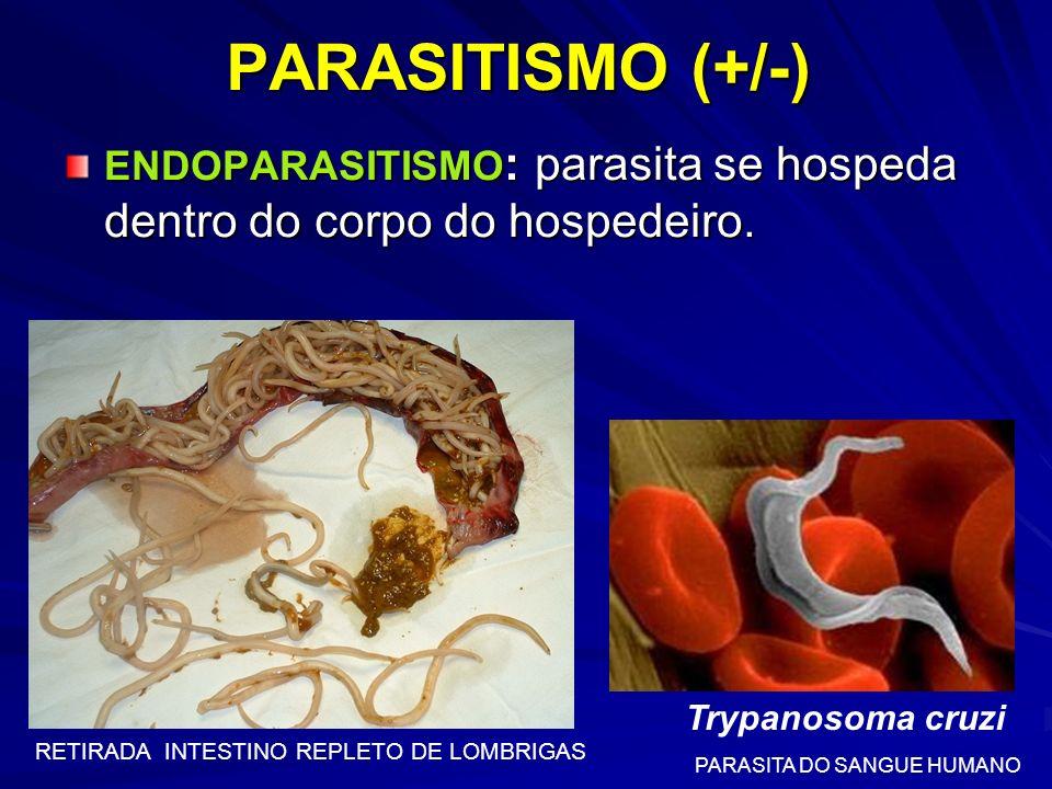 PARASITISMO (+/-) ENDOPARASITISMO: parasita se hospeda dentro do corpo do hospedeiro. Trypanosoma cruzi.