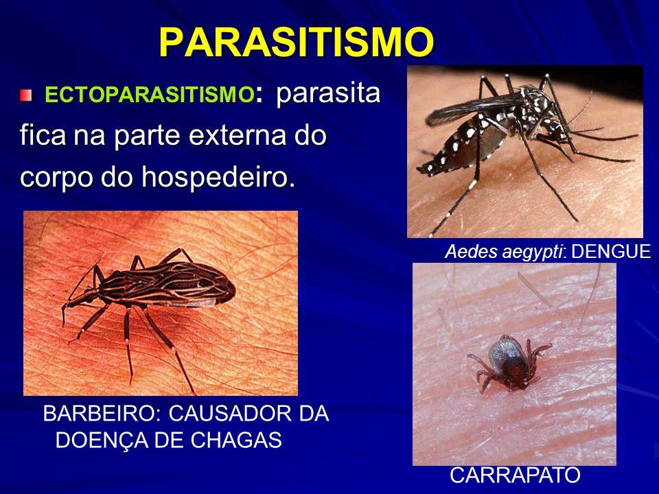 PARASITISMO fica na parte externa do corpo do hospedeiro.