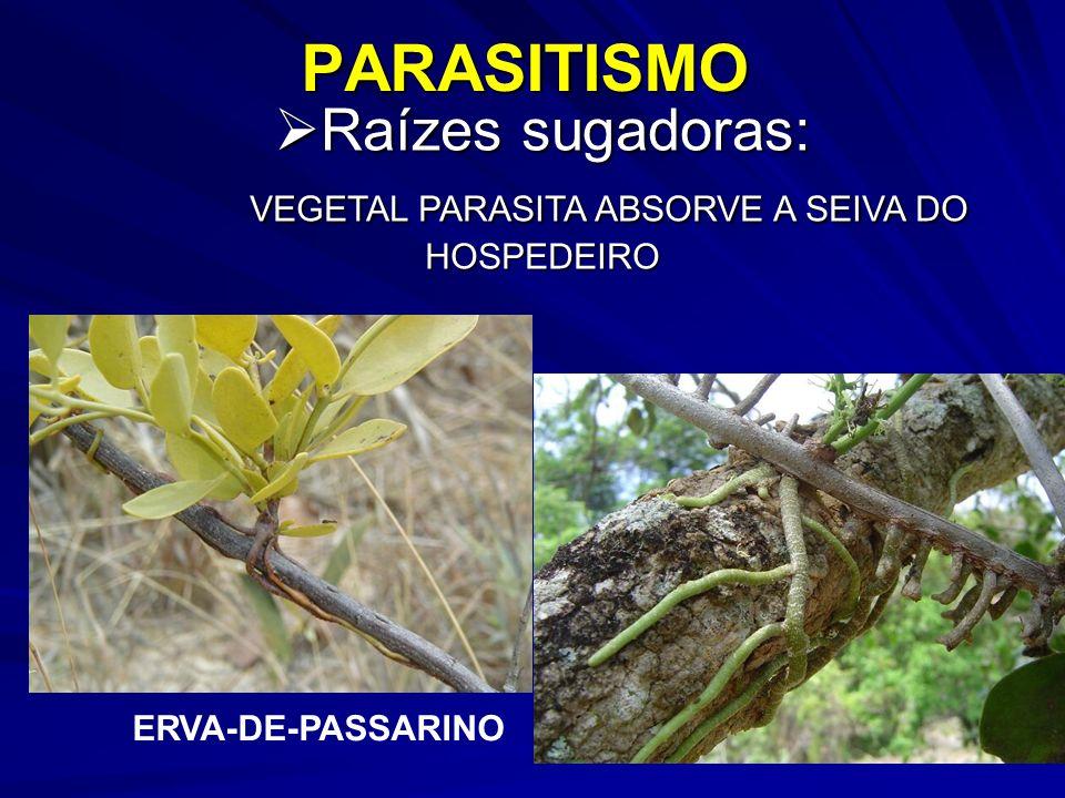 Raízes sugadoras: VEGETAL PARASITA ABSORVE A SEIVA DO HOSPEDEIRO
