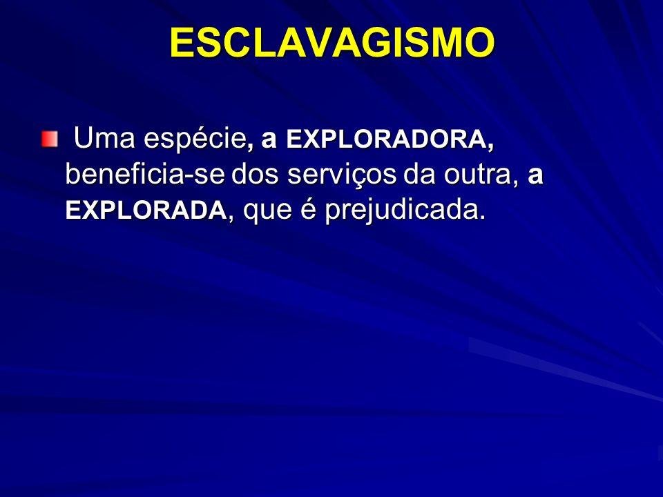 ESCLAVAGISMO Uma espécie, a EXPLORADORA, beneficia-se dos serviços da outra, a EXPLORADA, que é prejudicada.