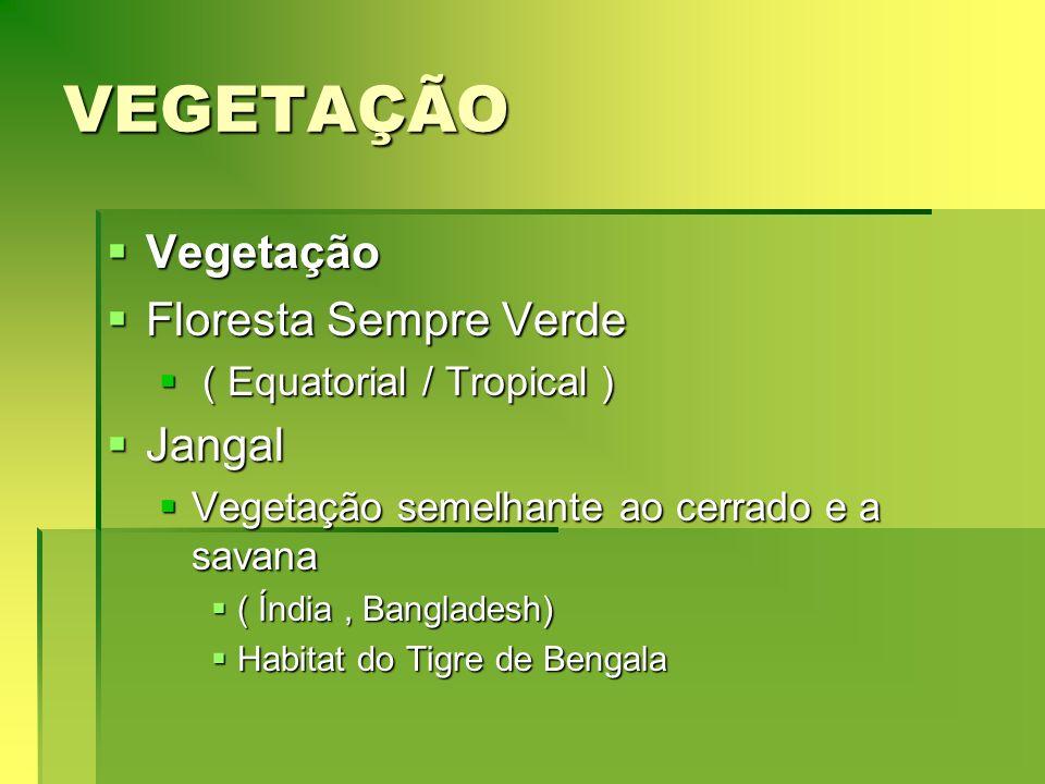 VEGETAÇÃO Vegetação Floresta Sempre Verde Jangal