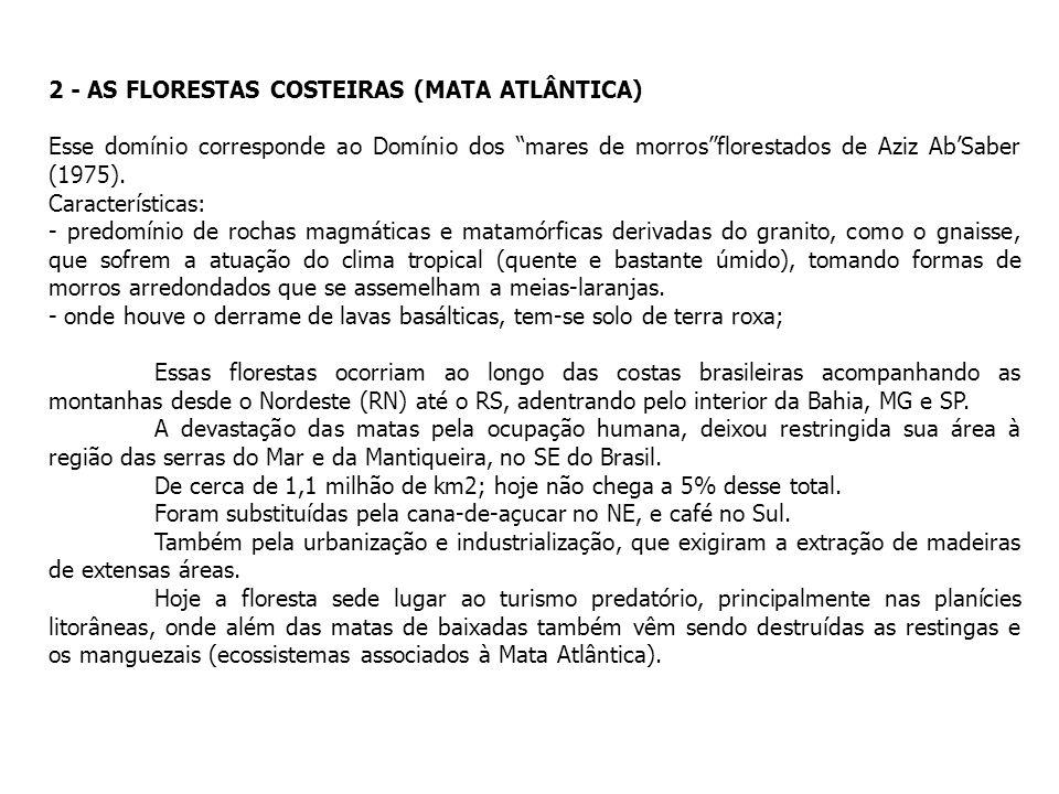 2 - AS FLORESTAS COSTEIRAS (MATA ATLÂNTICA)