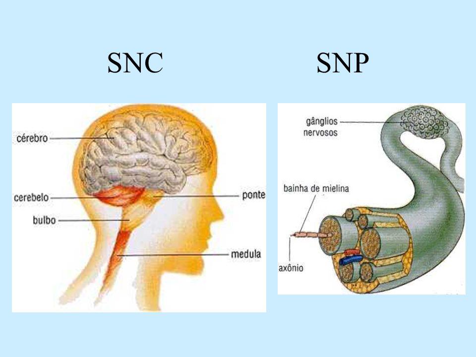 SNC SNP