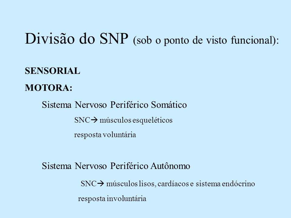 Divisão do SNP (sob o ponto de visto funcional):