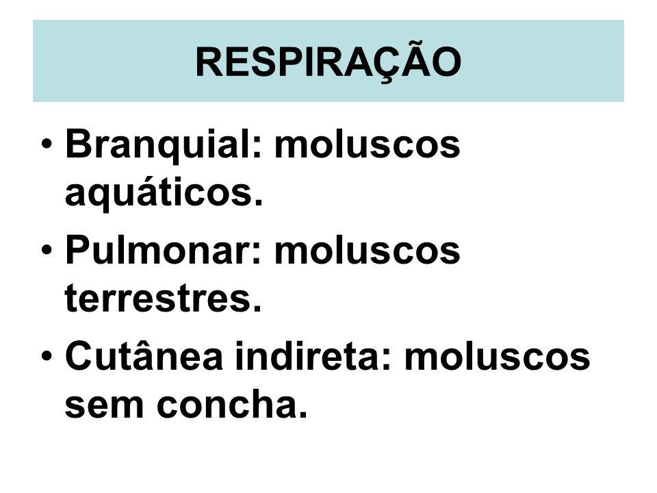 RESPIRAÇÃO Branquial: moluscos aquáticos. Pulmonar: moluscos terrestres.