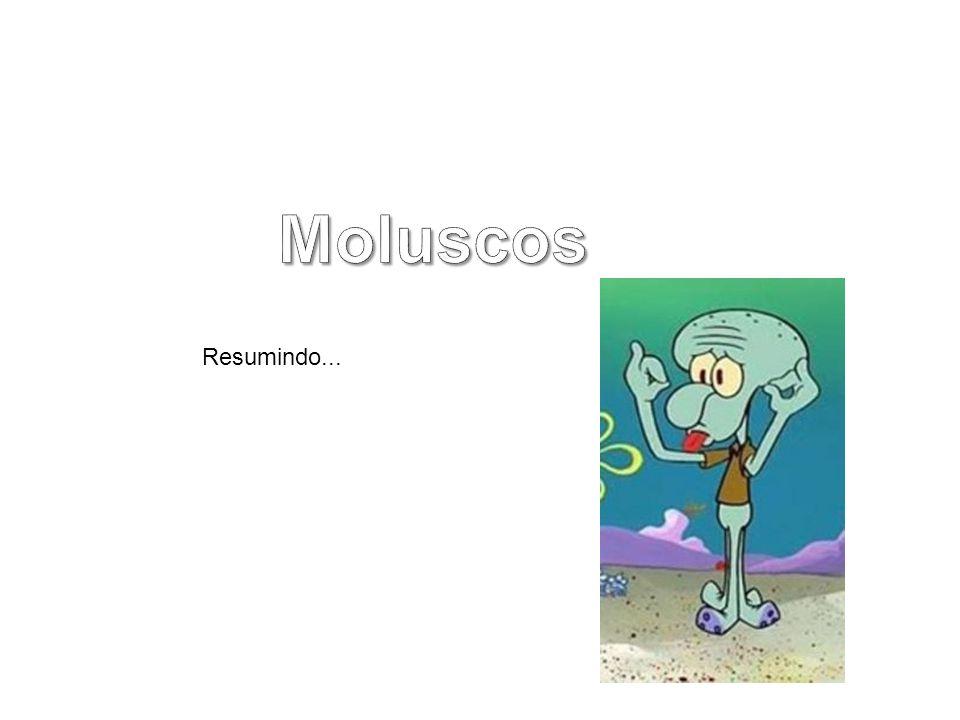 Moluscos Resumindo...