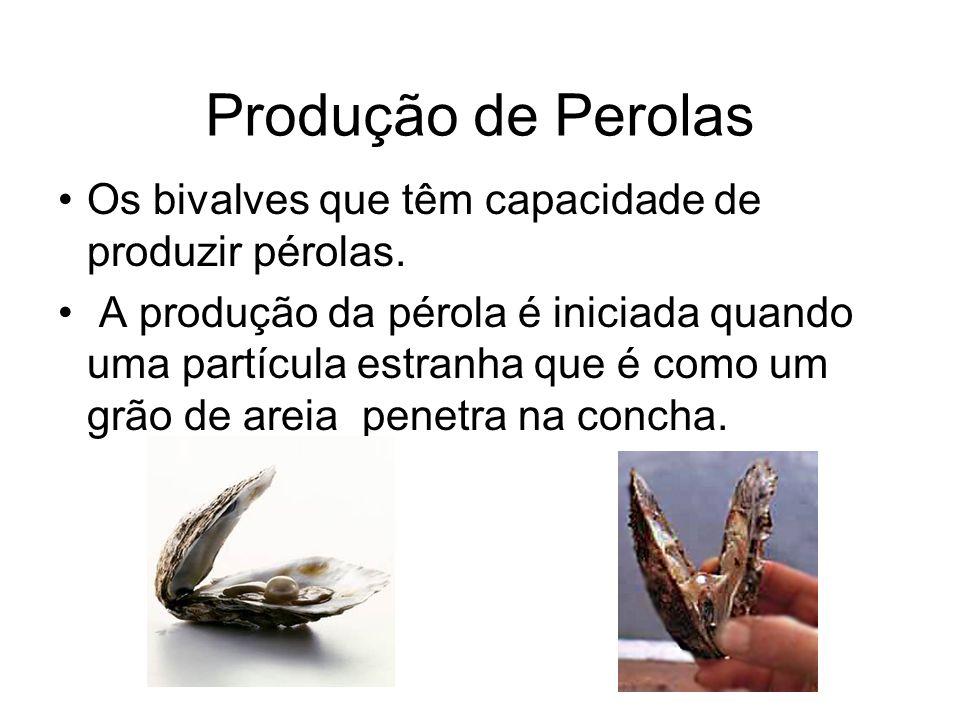 Produção de Perolas Os bivalves que têm capacidade de produzir pérolas.