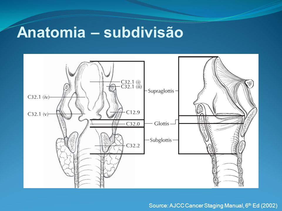 Anatomia – subdivisão Source: AJCC Cancer Staging Manual, 6th Ed (2002)