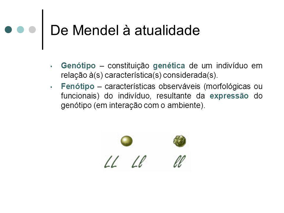 De Mendel à atualidadeGenótipo – constituição genética de um indivíduo em relação à(s) característica(s) considerada(s).