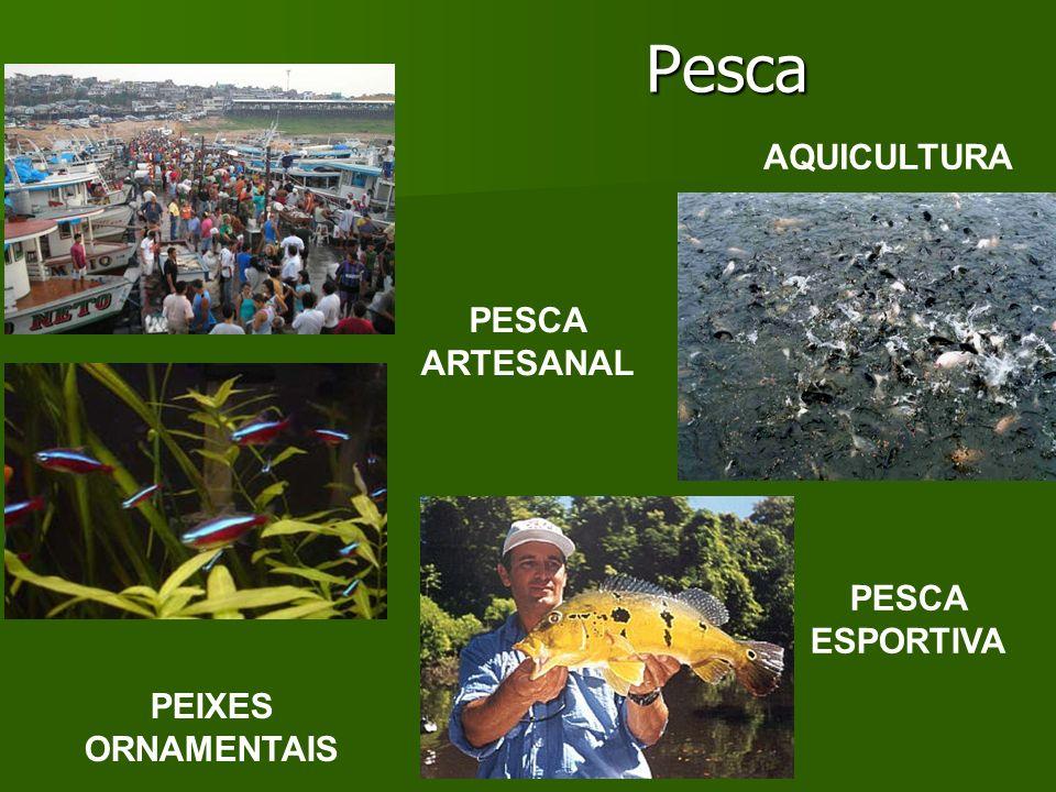 Pesca AQUICULTURA PESCA ARTESANAL PESCA ESPORTIVA PEIXES ORNAMENTAIS