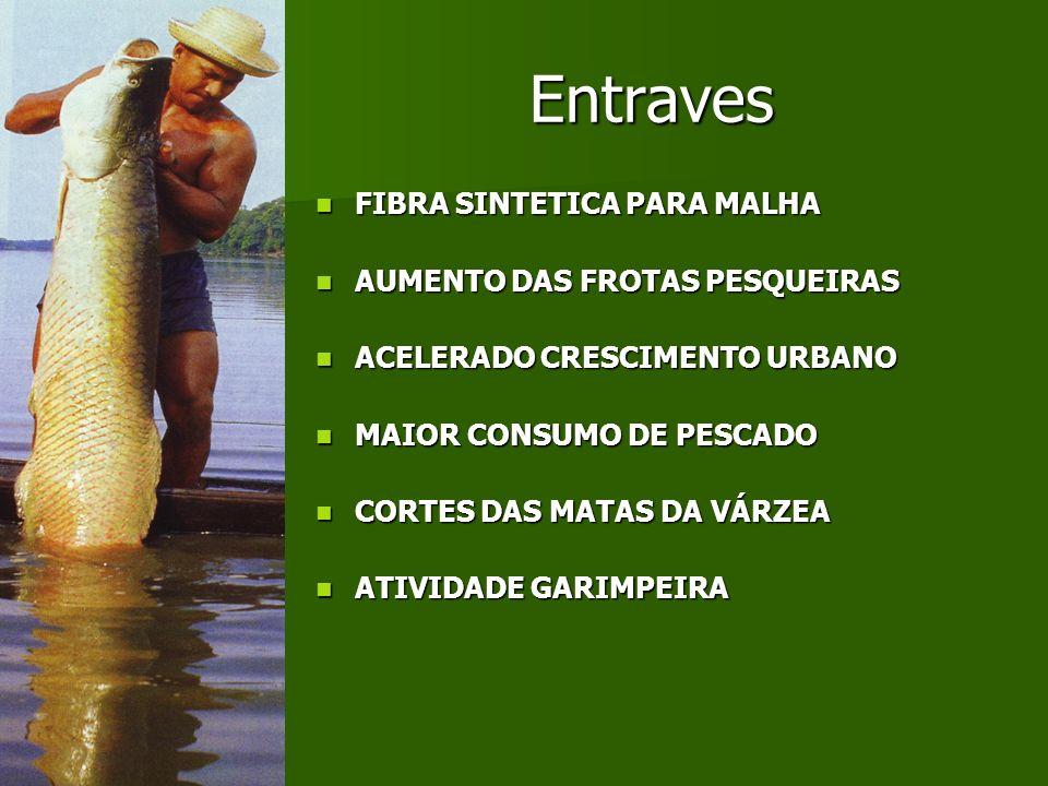 Entraves FIBRA SINTETICA PARA MALHA AUMENTO DAS FROTAS PESQUEIRAS