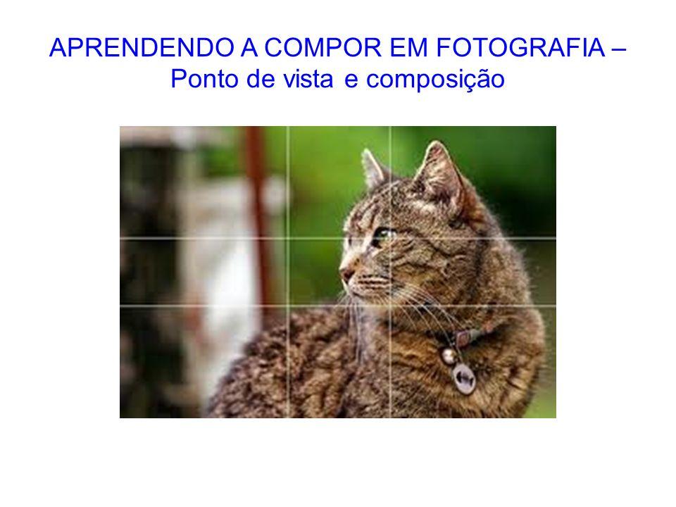 APRENDENDO A COMPOR EM FOTOGRAFIA – Ponto de vista e composição