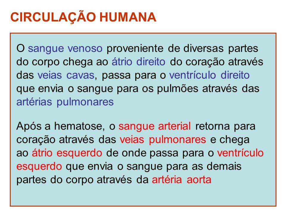 CIRCULAÇÃO HUMANA O sangue venoso proveniente de diversas partes