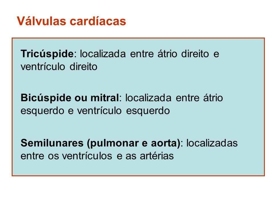 Válvulas cardíacas Tricúspide: localizada entre átrio direito e