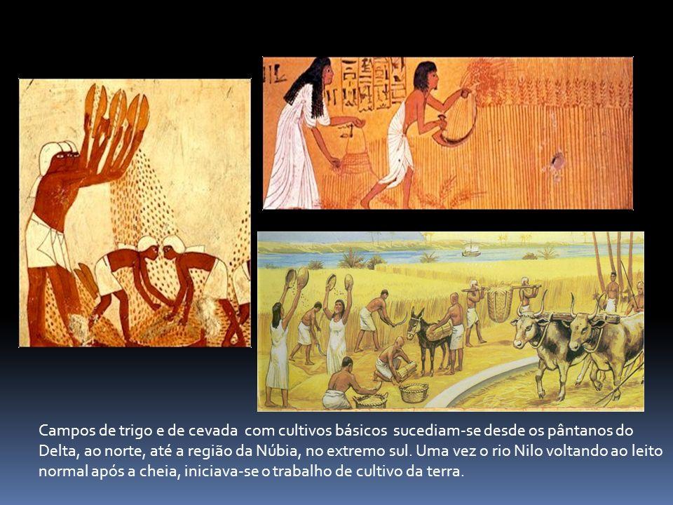 Campos de trigo e de cevada com cultivos básicos sucediam-se desde os pântanos do Delta, ao norte, até a região da Núbia, no extremo sul.