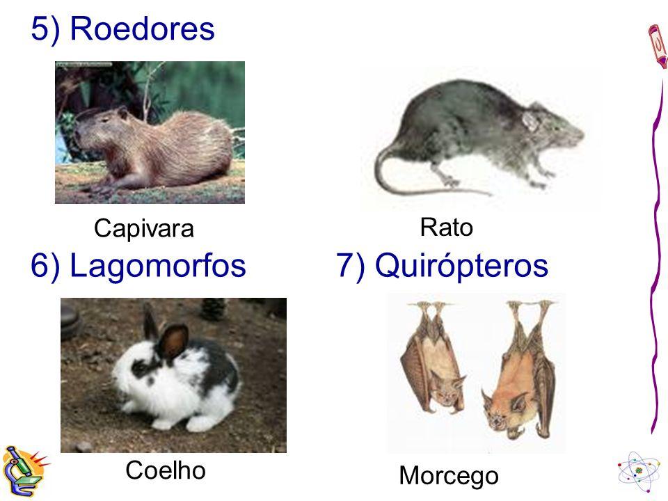 5) Roedores Capivara Rato 6) Lagomorfos 7) Quirópteros Coelho Morcego
