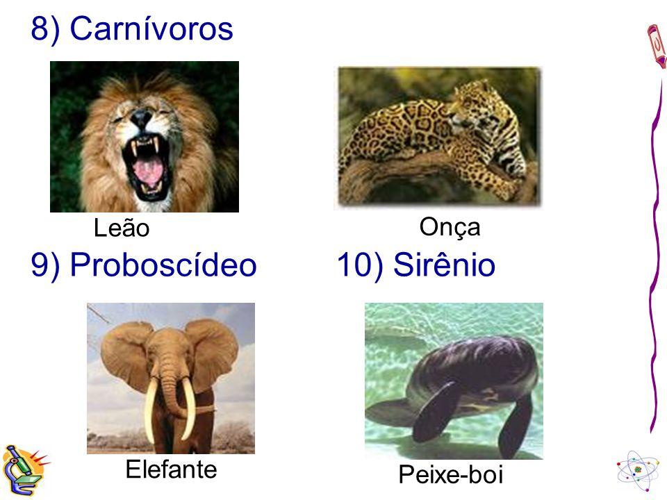 8) Carnívoros Leão Onça 9) Proboscídeo 10) Sirênio Elefante Peixe-boi