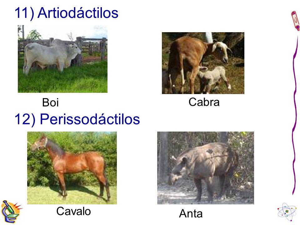 11) Artiodáctilos Boi Cabra 12) Perissodáctilos Cavalo Anta
