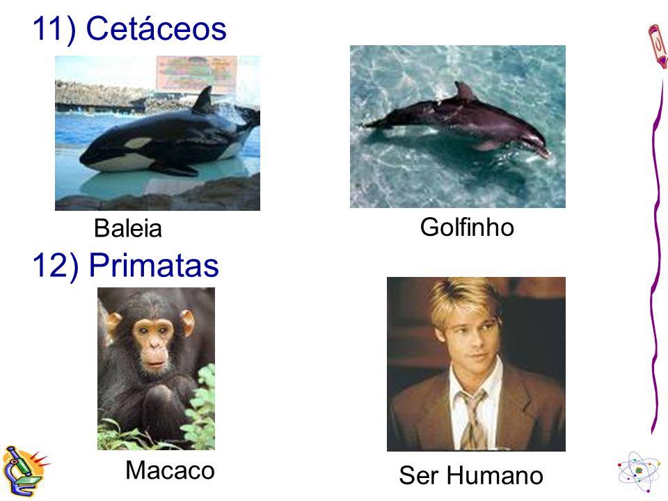 11) Cetáceos Baleia Golfinho 12) Primatas Macaco Ser Humano