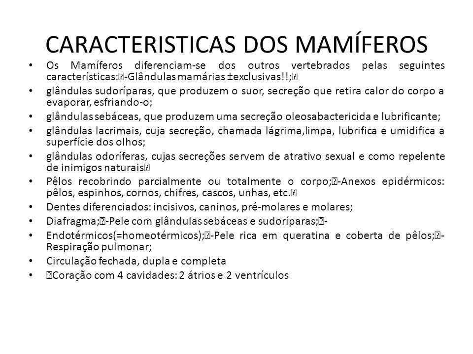 CARACTERISTICAS DOS MAMÍFEROS