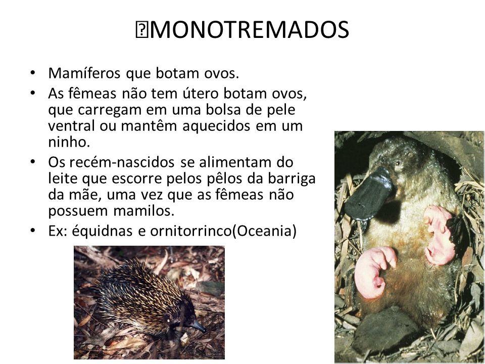 ‡MONOTREMADOS Mamíferos que botam ovos.
