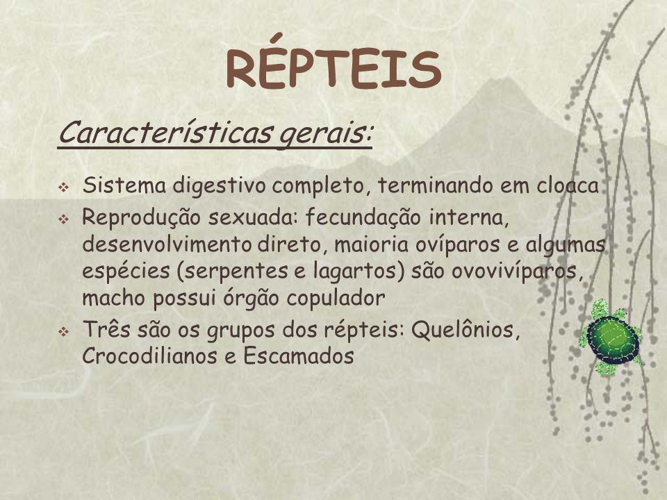 RÉPTEIS Características gerais: