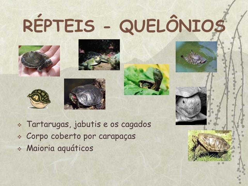 RÉPTEIS - QUELÔNIOS Tartarugas, jabutis e os cagados