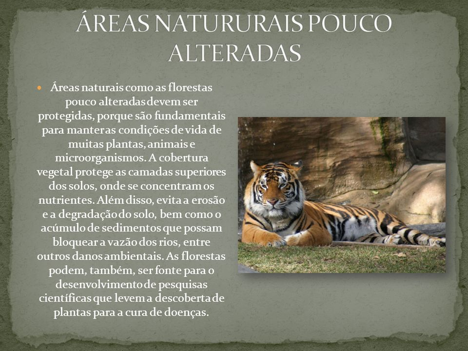 ÁREAS NATURURAIS POUCO ALTERADAS