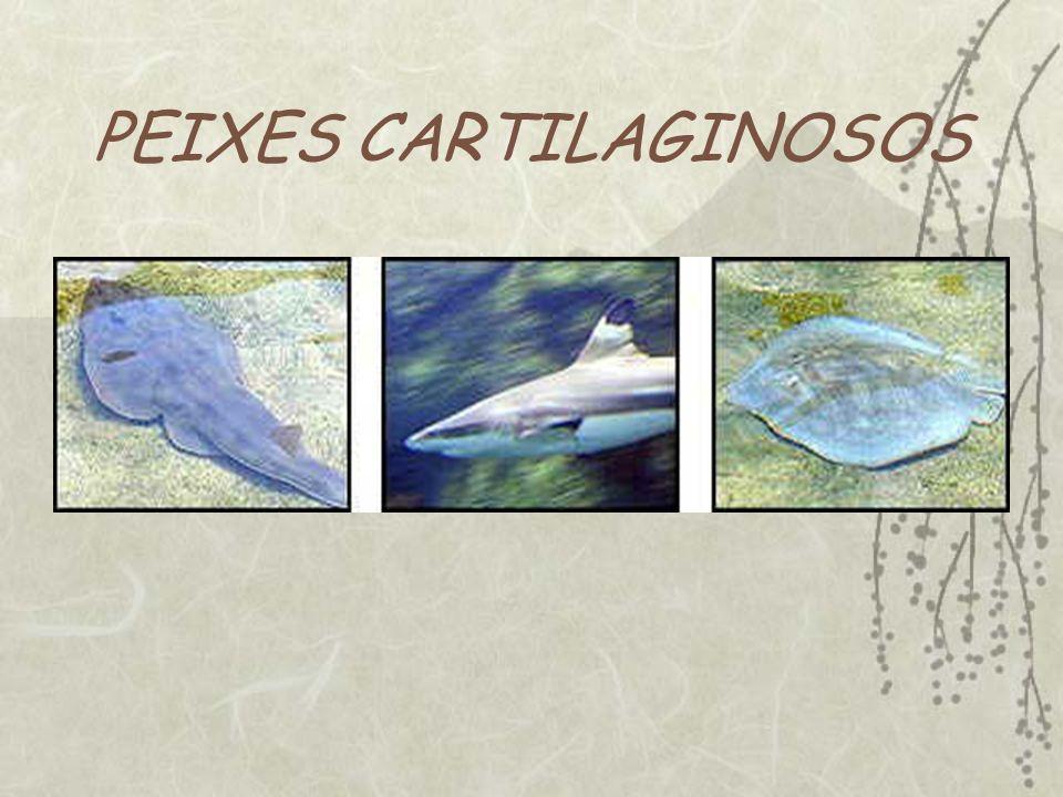 PEIXES CARTILAGINOSOS