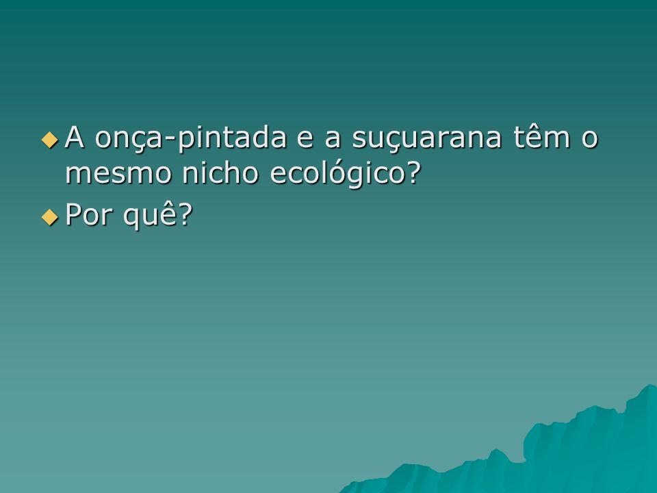 A onça-pintada e a suçuarana têm o mesmo nicho ecológico