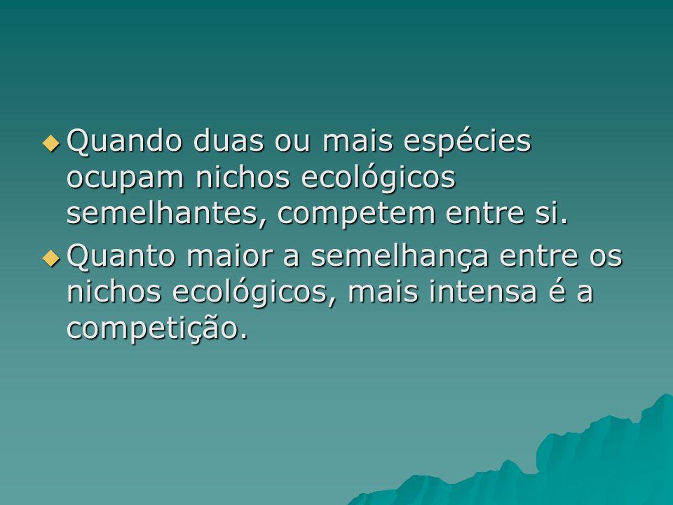 Quando duas ou mais espécies ocupam nichos ecológicos semelhantes, competem entre si.