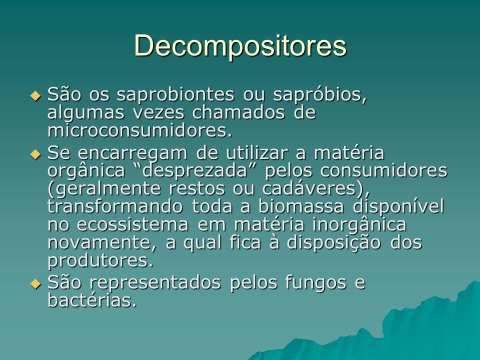 Decompositores São os saprobiontes ou sapróbios, algumas vezes chamados de microconsumidores.
