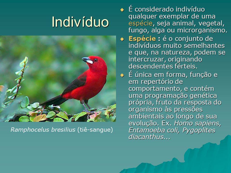 É considerado indivíduo qualquer exemplar de uma espécie, seja animal, vegetal, fungo, alga ou microrganismo.