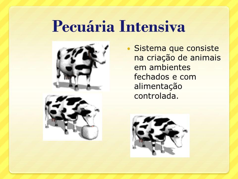 Pecuária IntensivaSistema que consiste na criação de animais em ambientes fechados e com alimentação controlada.