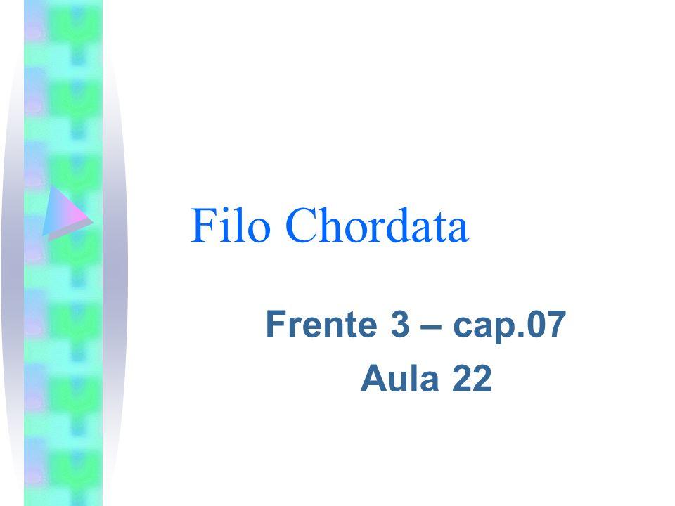 Filo Chordata Frente 3 – cap.07 Aula 22